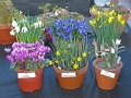 Pershore Early AGS Plant Fair and Show