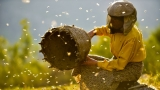 Honeyland (Film)
