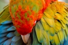 Summer Festival of Feathers at Birdland