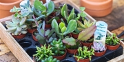 Closing the loop, tips for a more green fingered life