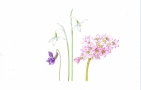 Botanical Illustration: Meadow Flowers in Spring