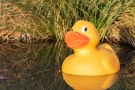Easter Duck Quest
