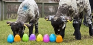 Easter Eggcitement
