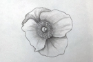 Young Person's Online Class: Introduction to Drawing (Age 13+)