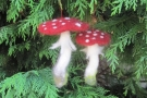 One-day Workshop: Fanciful Fungi