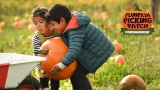 Fordingbridge Pumpkin Picking Patch