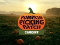 Cardiff Pumpkin Picking Patch