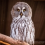 Have a Hoot this Half Term at Birdland Park & Gardens