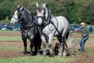 Historic Life Weekend: Agriculture – the role of horses
