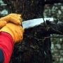 Pruning Old Fruit Trees