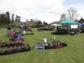 Mentmore Village Plant Sale-Saturday 25th April 2020 12-4pm